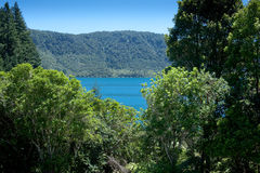 Distrito dos lagos Rotorua imagem de stock royalty free