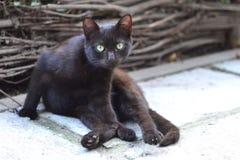 Distrustful black cat Royalty Free Stock Image