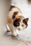 Distrustful domestic cat Stock Photos