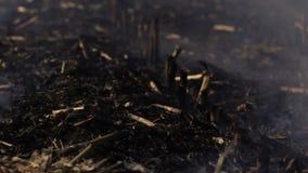 Distruzione ambientale ecologica di danno della natura stock footage