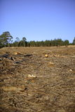 Distruzione della foresta Fotografia Stock