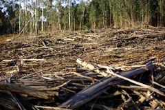 Distruzione della foresta Immagine Stock