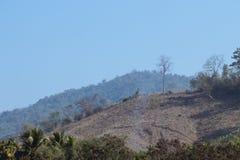 Distruzione della foresta per l'agricoltura nella campagna Immagine Stock