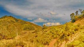 Distruzione della foresta pluviale Immagini Stock