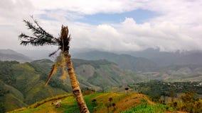 Distruzione della foresta pluviale Immagine Stock