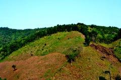 Distruzione della foresta pluviale in Tailandia Immagine Stock Libera da Diritti