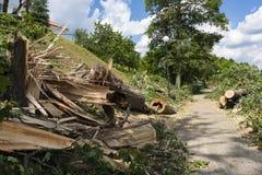 Distruzione sul percorso della bici dopo i venti di uragano Fotografia Stock