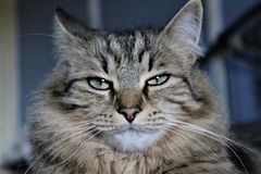 Disturbed cat royalty free stock photos