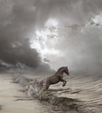 Disturbing. Ocean and horses - two fine unrestrained elements Stock Images