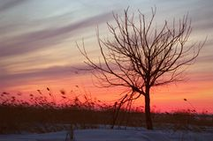 Disturbing sunset. Naked Tree in the winter on a sunset. Winter. Russia. Ladoga Stock Images