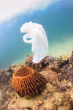 Disused plastic bag floating over a coral reef Royalty Free Stock Photo