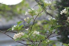 Dit is aardige bloem Dit is witte bloemen royalty-vrije stock afbeelding