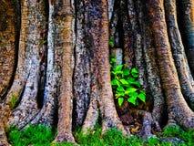 Dit beeld is over installatie in de boom, Thailand Royalty-vrije Stock Foto's