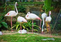 Dit beeld is over Thaise Flamingo, Bangkok Thailand Stock Afbeeldingen