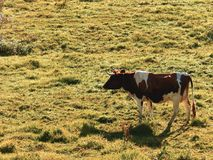 Dit beeld toont de landbouw en de fauna die wij in ons land Venezuela, in de staat van Merida hebben Stock Fotografie