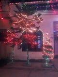 Dit is de foto van de bomen met verlichting stock foto's