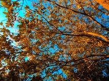 Dit is de mening van een boom van onderaan stock foto
