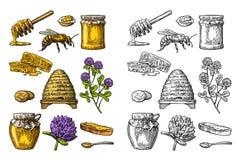 Dit is dossier van EPS8 formaat Kruiken honing, bij, bijenkorf, klaver, honingraat Vectorwijnoogst gegraveerde illustratie royalty-vrije illustratie