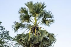 Dit is een Plam-boom royalty-vrije stock fotografie