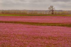 In-de-roze royalty-vrije stock fotografie