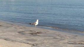 Dit is het Arenal Lluchmayor strand stock videobeelden
