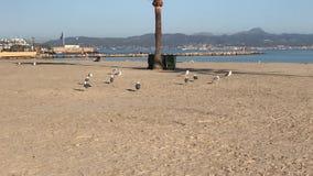 Dit is het Arenal Lluchmayor strand stock video