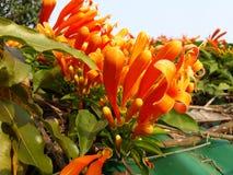 Dit is kleurrijk en wauw het kijken bloem royalty-vrije stock foto