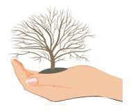 Dit is mijn boom Royalty-vrije Stock Foto
