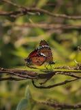 Dit is vlinder en samen slepenvlinder op royalty-vrije stock foto