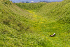 Ditch Badbury Rings Iron Age hill fort Royalty Free Stock Photo