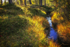 Ditch in the forest Royalty Free Stock Photos