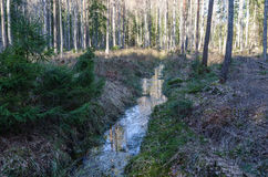 Ditch in a forest Royalty Free Stock Photography