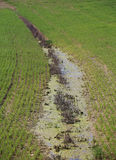 Ditch full of water because the cultivated field does not absorb. More water after the abundant spring rains royalty free stock photo