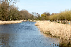 Ditch in a park. Royalty Free Stock Images