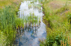 Ditch with reeds and water plants Stock Images