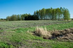 Ditch with water in front of green field, copse and blue sky. Spring view royalty free stock photography