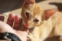 Dito bitting di Kitty fotografie stock libere da diritti
