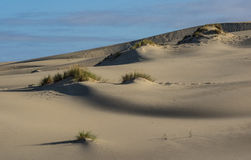 diun horyzontu kosa kurshskaya Russia piasek kroczy rozciąganie Zdjęcia Stock
