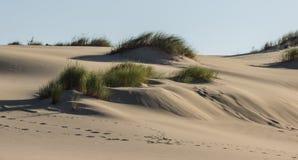 diun horyzontu kosa kurshskaya Russia piasek kroczy rozciąganie Obraz Royalty Free