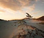 diun horyzontu kosa kurshskaya Russia piasek kroczy rozciąganie Zdjęcie Royalty Free