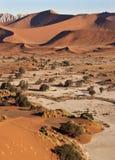 diun Namibia piaska sossusvlie Obraz Royalty Free