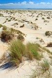 diun trawy hełma piasek Fotografia Stock