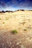 diun trawy piasek Zdjęcie Royalty Free