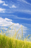 diun trawy piasek wysoki Fotografia Stock