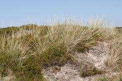 Diuna krajobraz z piaskiem Fotografia Royalty Free