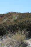 Diuna krajobraz z piaskiem Zdjęcia Stock