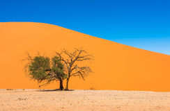 Diuna 45, Sossusvlei, Namib-Naukluft park narodowy, Namibia Obraz Royalty Free