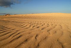 Diuny Corralejos, w Fuerteventura zdjęcia stock