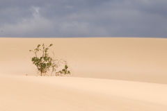 Diuny Fuerteventura Obraz Royalty Free