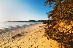 Diuny i rośliny w Maria Pia plaży zdjęcie stock